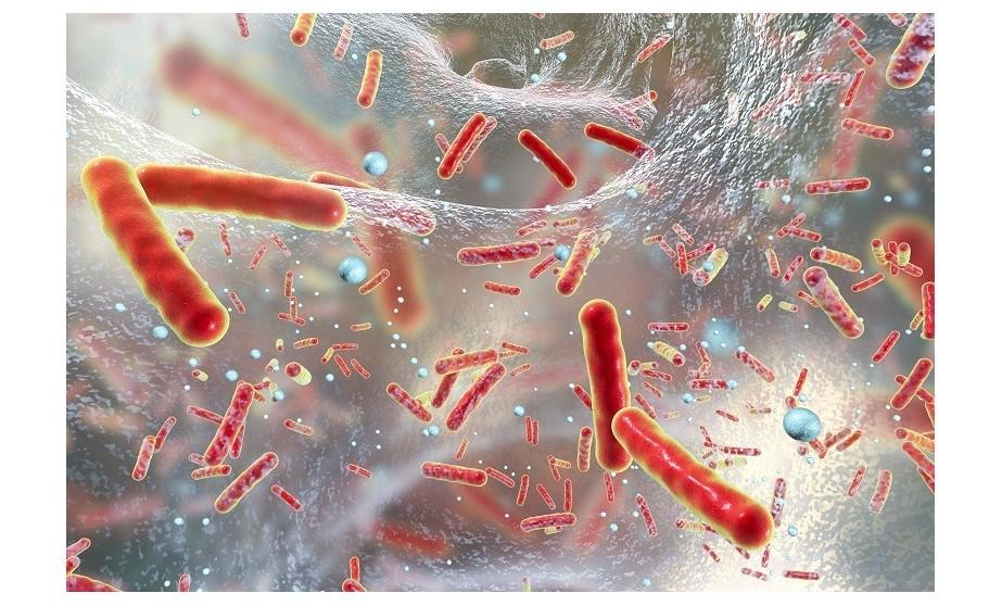 Suplementy zwiększające odporność organizmu